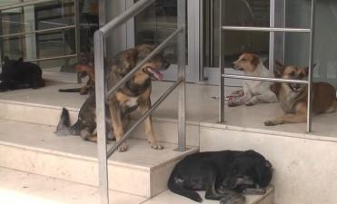 """""""El de los perros callejeros, es un problema con solución"""""""