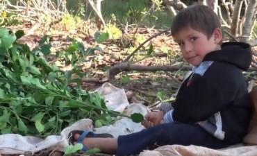 Impulsan ley contra el trabajo infantil en la yerba mate