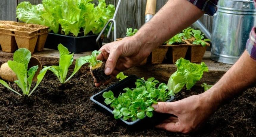 Nutrición: Huerta Orgánica