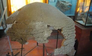 Exposición paleontológica en El Timón