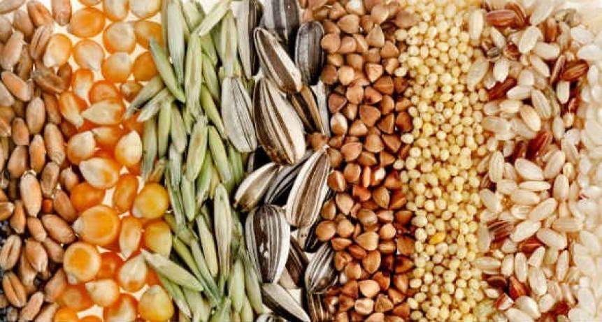 Nutrición: Semillas
