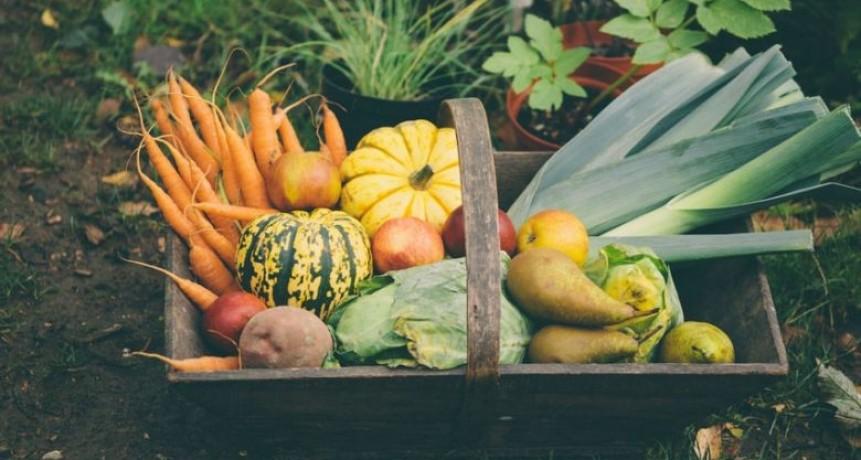 Nutrición: Frutas y verduras en otoño