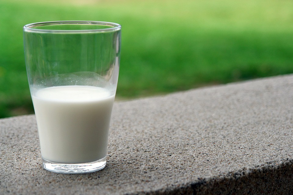 Nutrición: Leche, yogur y quesos