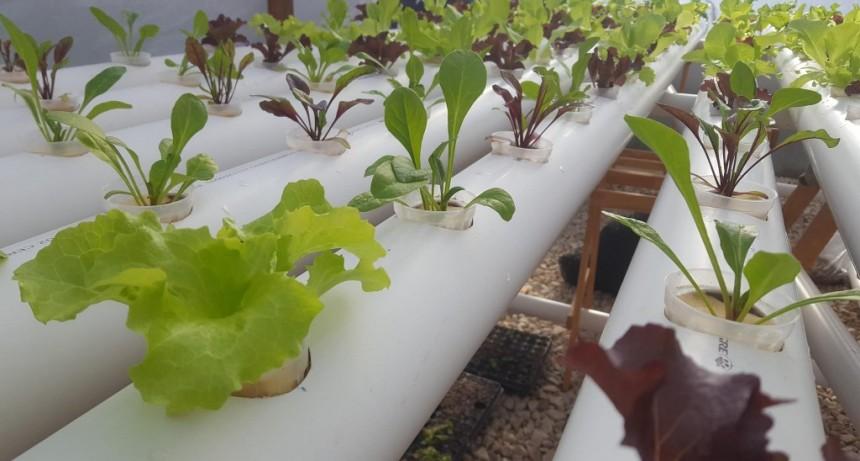 Acuaponia, alimentación orgánica en casa