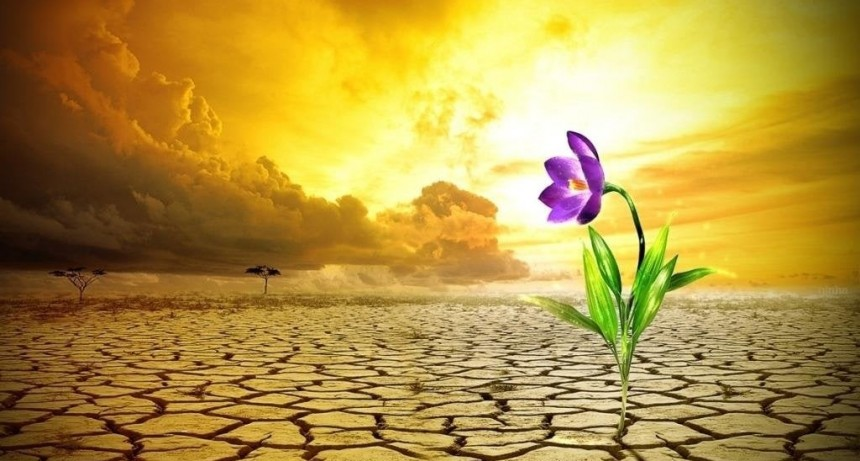 Psicología Social: ¿Que es la resiliencia?