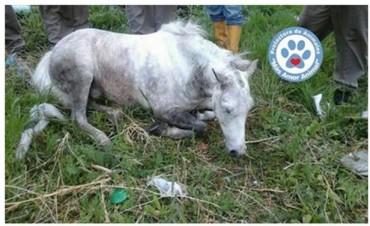 La protecto Mas Amor animal denunció la muerte de dos caballos