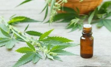 El aceite de Cannabis y la promesa de una mejor calidad de vida