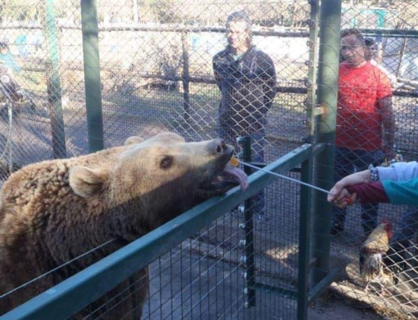 """""""En el Zoo Luján es todo muy descarnado y brutal"""""""