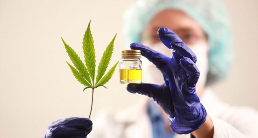 El HCD aprobó la regulación del uso y la producción del Cannabis