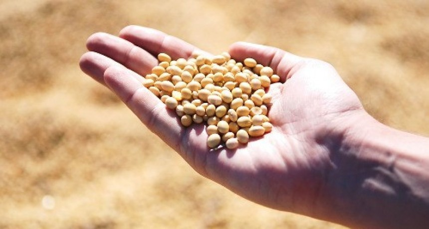 """""""La semilla es alimento y soberanía"""""""